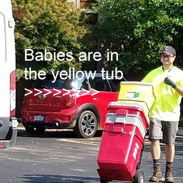 BabiesInTheYellowTub